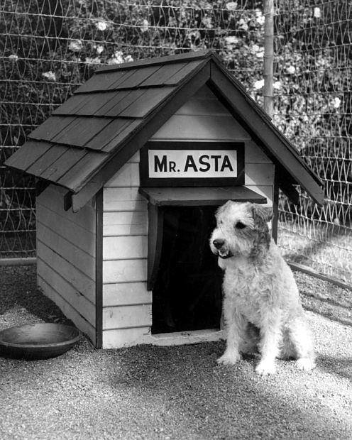 Asta, the dog, Canine Star
