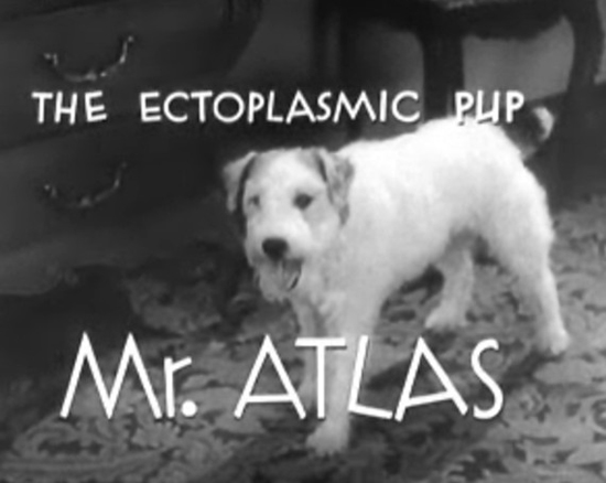 Asta the dog as Mr. Atlas in Topper Takes a Trip