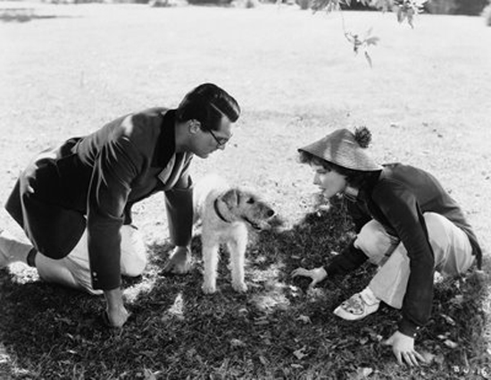 Asta the Dog, Bringing Up Baby, Katharine Hepburn, Cary Grant