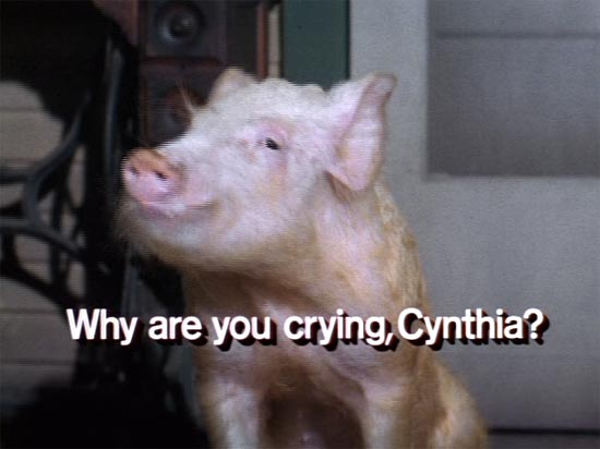 arnold the pig, green acres, why are you crying cynthia