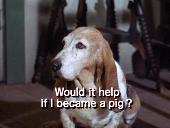 cynthia, green acres, would it help if i became a pig