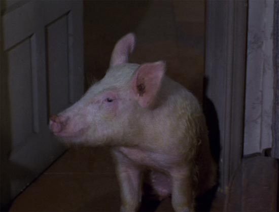 green acres, arnold go to your room