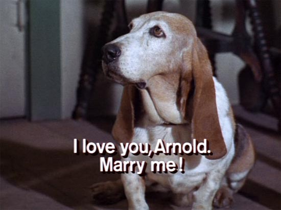 Green Acres, cynthia the basset hound wants to marry Arnold the pig