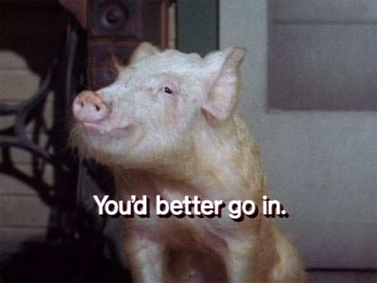 Green Acres, Arnold the pig