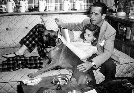 bogie and bacall relaxing at home with dog