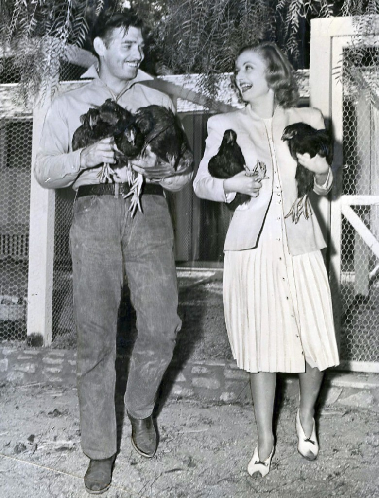 gable and lombard chickens