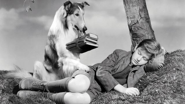 Roddy MocDowall Lassie Come Home (1943)